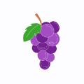 葡萄社区app